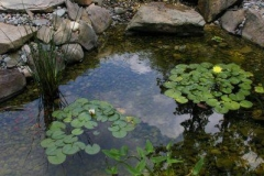 Dillon-Pond-4