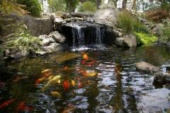 Sade-Pond-4
